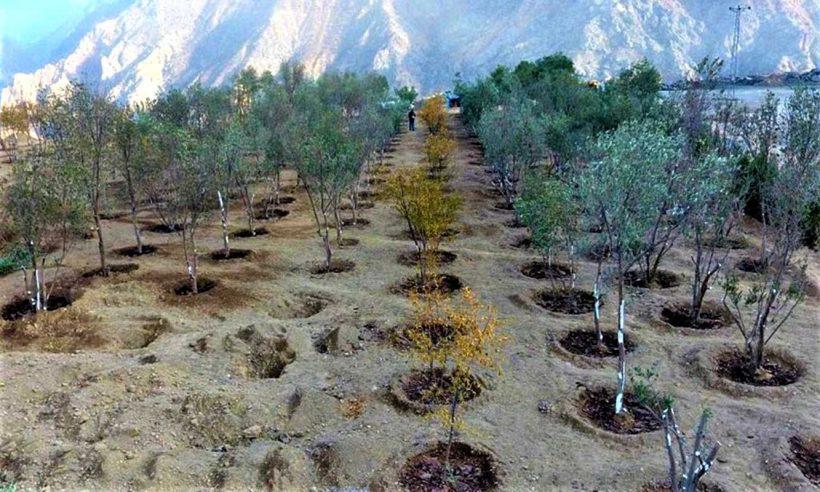 Yusufeli'nde 15 bin ağaç taşındı
