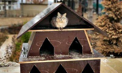 TOKİ inşaatlarının atıkları sokak hayvanlarına yuva oluyor